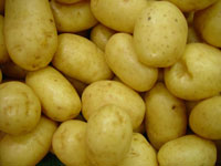 Delaware_potatoes_vegetable